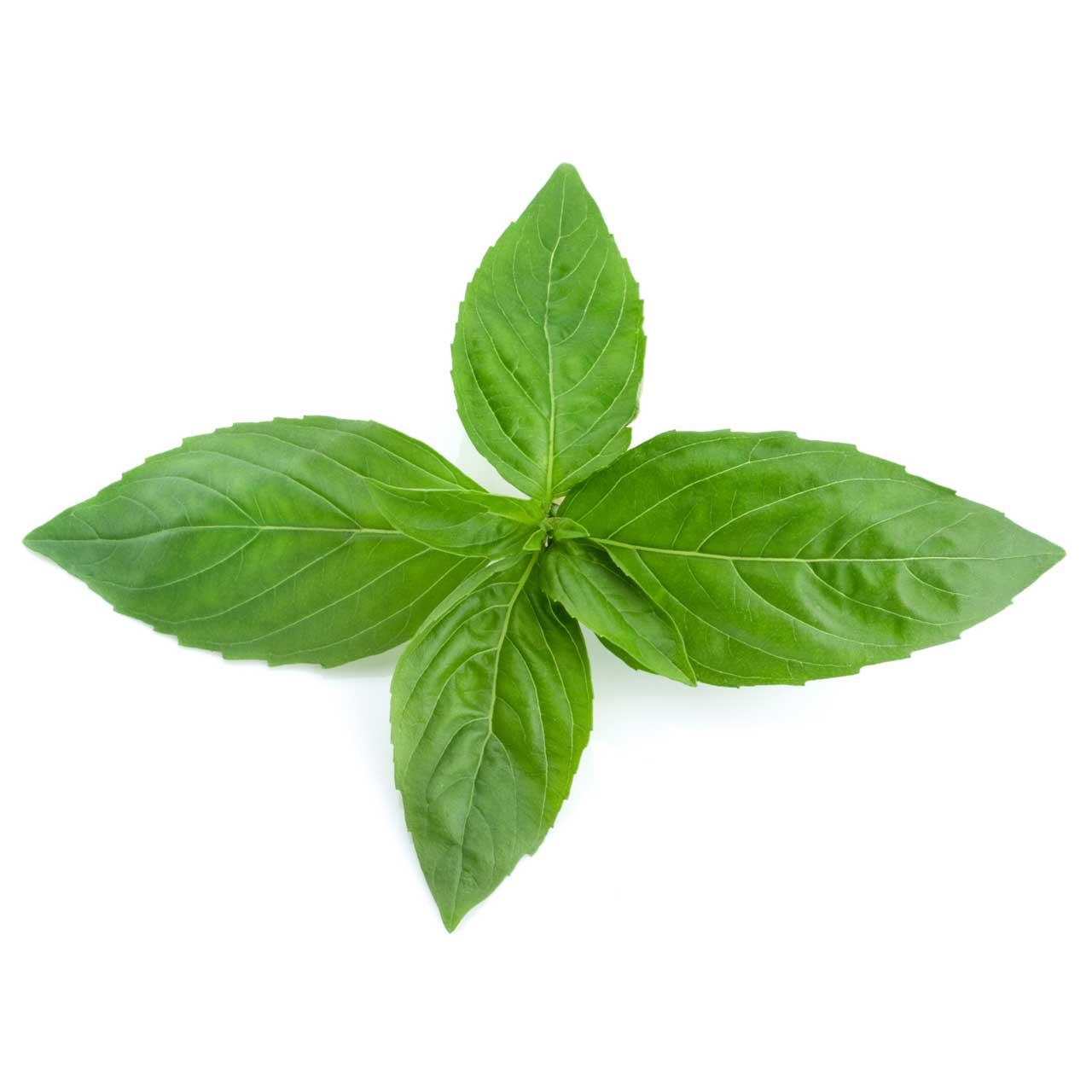 Distribucion de albahaca frutas ramirez s l for Cultivo de albahaca en interior